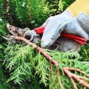 Pruning & Debris Removal
