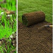Seeding & Sod